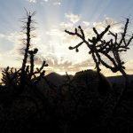 Lanzarote - słońce na wyspie wiecznej wiosny06