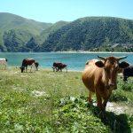 Kiezienoj-Am – jezioro na pokaz08