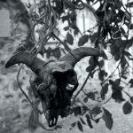 Janapar Trail black & white - część północna - Piąty Kierunek03