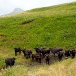 Janapar Trail - szlak przez Arcach i Armenię - Piąty Kierunek44