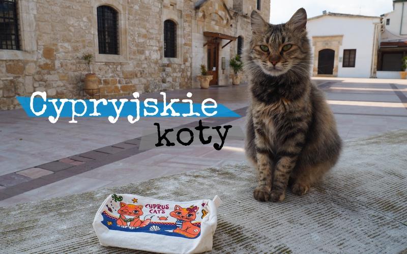 Cypryjskie koty - Piąty Kierunek