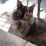 Cypryjskie koty - Piąty Kierunek04