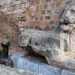 Cypryjskie koty - Piąty Kierunek06