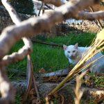 Cypryjskie koty - Piąty Kierunek07