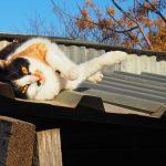 Cypryjskie koty - Piąty Kierunek08
