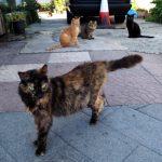 Cypryjskie koty - Piąty Kierunek10