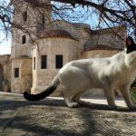 Cypryjskie koty - Piąty Kierunek11
